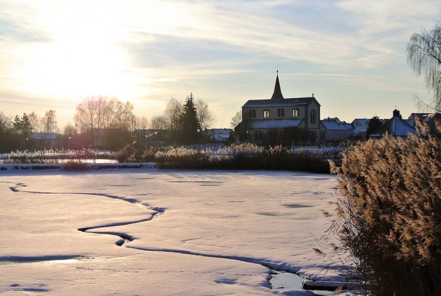 Der Weihnachtskarpfen - oder der nachhaltigste Fisch der Welt?