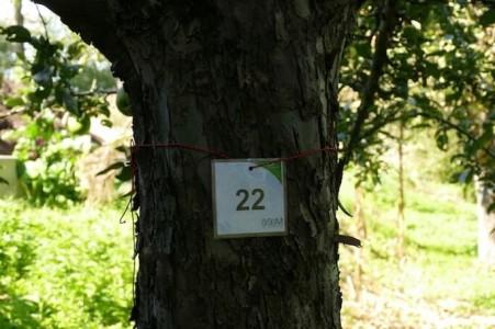 nachhaltiges reisen in deutschland oekologisch umweltbewusst artenvielfalt natur streuobstwiese alte apfelsorten obstbaumpatenschaft