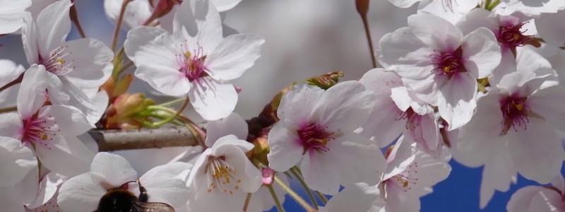 nachhaltige unterkuenfte in deutschland urlaub in der natur umweltbewusst klimafreundlich artenschutz bienen hummeln kirschbluete