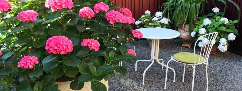 koeln weiss staedtereise urlaub in deutschland nachhaltige unterkunft boutique hotel ferienwohnung antik vintage cafe patisserie backsteinhaus atriumgarten