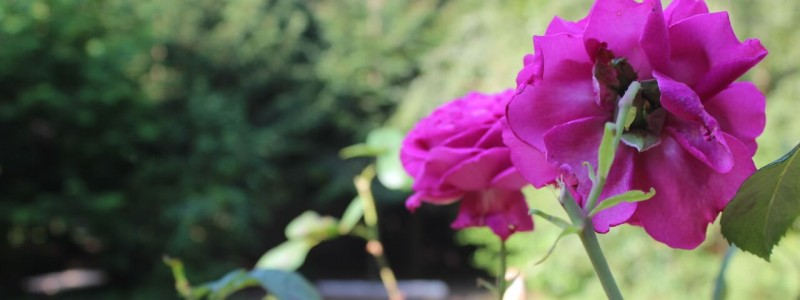 nachhaltige unterkunft das haus am see ellertshaeuser see unterfranken urlaub am wasser auf dem land retro architektenhaus holzofen freistehende badewanne eco hideaway rosen