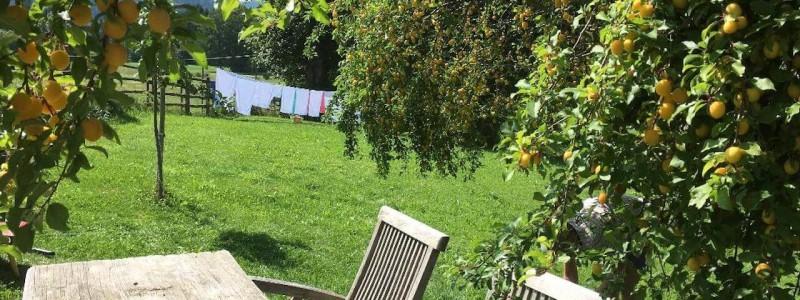 nachhaltige unterkuenfte in deutschland urlaub in der natur auf dem land mit kindern in den bergen mit der familie bayern voralpenland gutshof achatswies ferienwohnung marillenbaum sommer