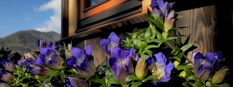 nachhaltige unterkuenfte in deutschland aussergewoehnlich bayern weil bueffelhof beuerbach naturzimmer max tiny house wohnwagon blumenkasten vor dem haus